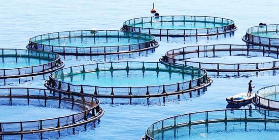مجوز پرورش ماهی